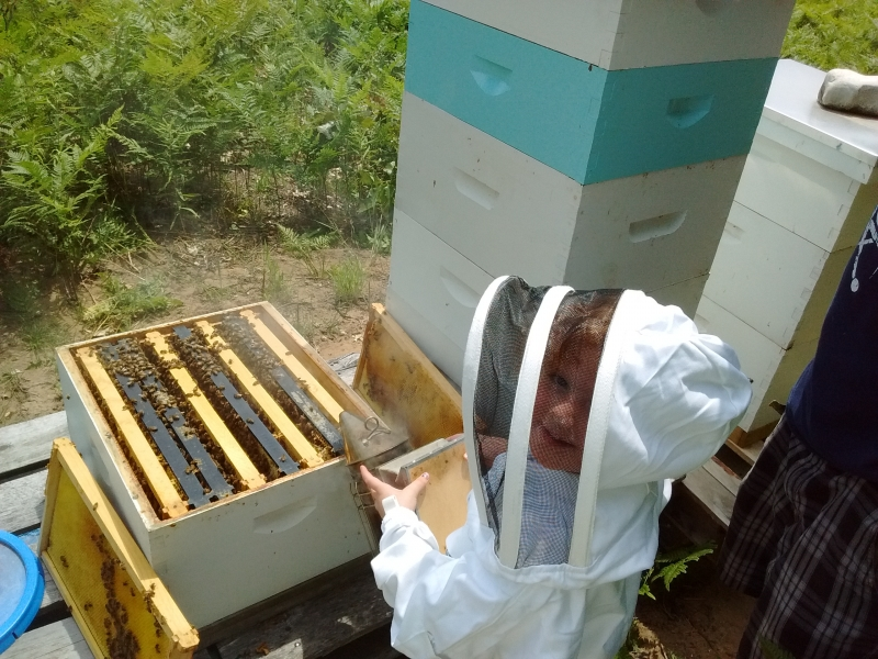 Livi Working A Hive