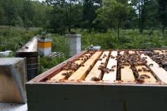 Hive And Smoker