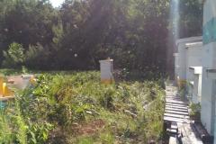 Summer Hives