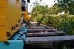 Hive Activity