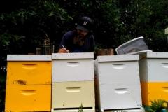 Brett Working Some Hives