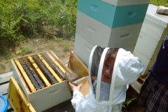 Livi Working A Hive