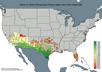 The Truth Of Africanized Bees