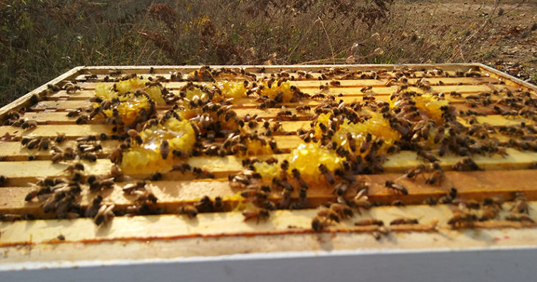 Getting Started In Beekeeping – Necessary Equipment