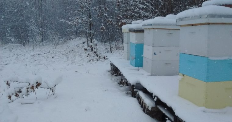 How To Overwinter Bees In A Northern Climate